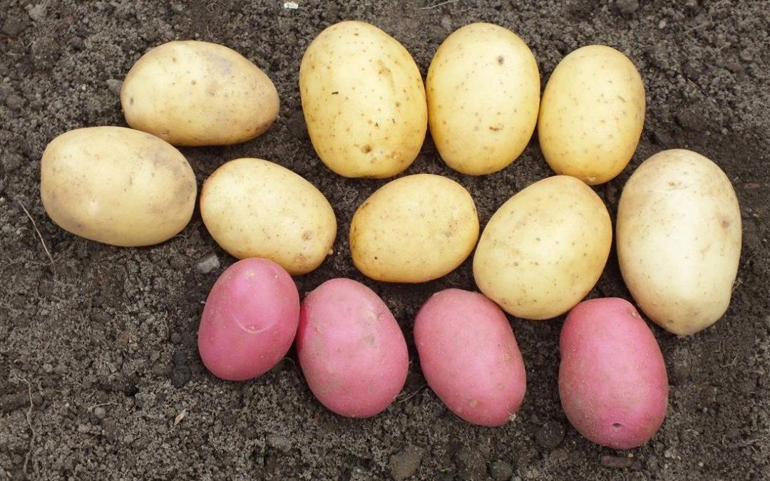 4 Vegetable Myths (we still quite like)